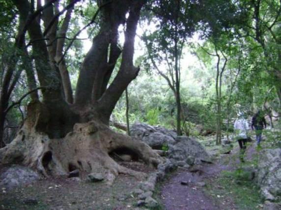 bosque-de-ombues-2