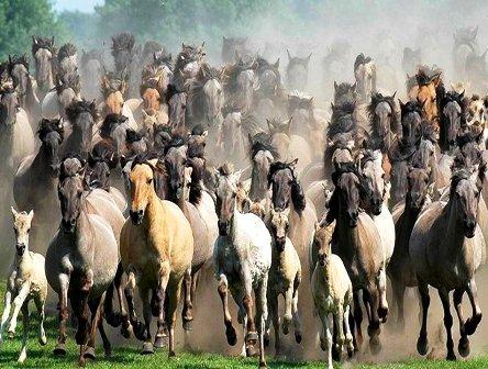caballo bis