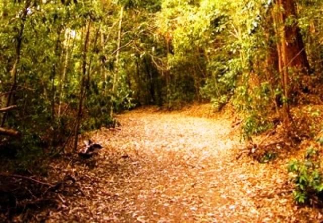 camino del arboreto okkko