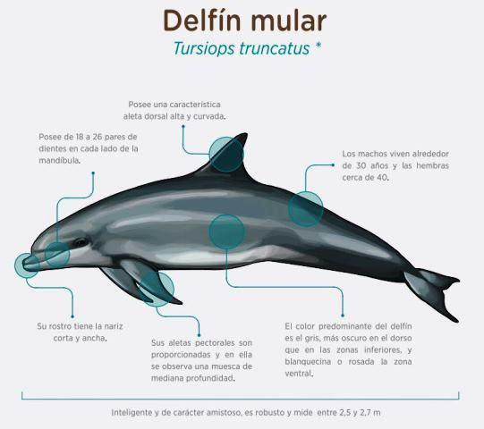 caracteristicas-delfil-mular
