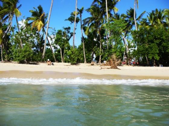 cocotiers-plage-des-salines-sainte-anne