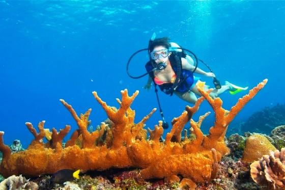 elk-horn-coral-belize-barrier-reef_image