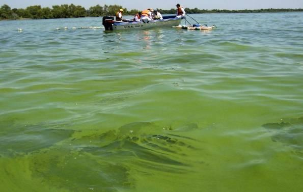 estado-actual-del-lago-ypacarai-totalmente-verde-por-las-cianobacterias-al-fondo-la-embarcacion-con-el-intendente-aregeno-osvaldo-leiva_595_377_129388