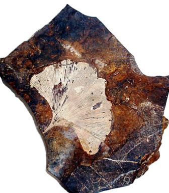 fosil paleoceno