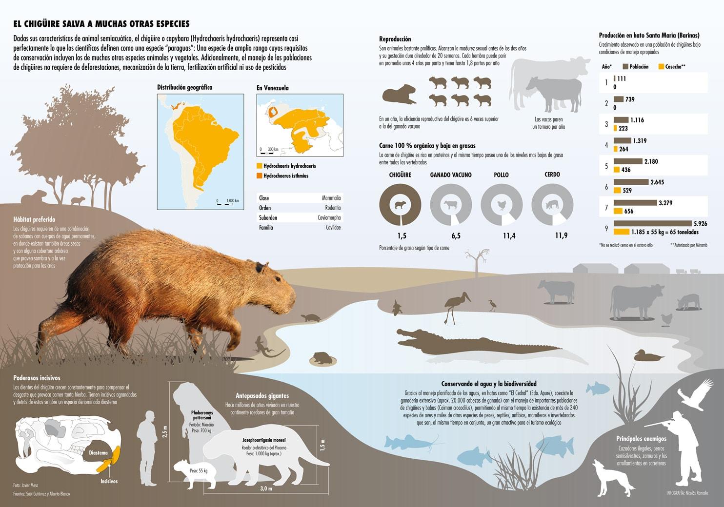 infografia-chiguire-Carpicho-Capibara