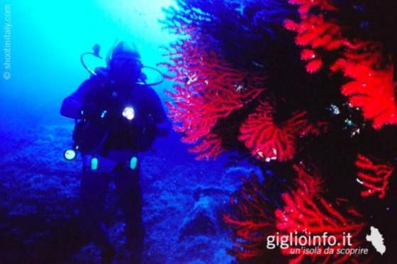 isola_del_giglio_06
