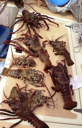 kiribati-abemama-lobster_L