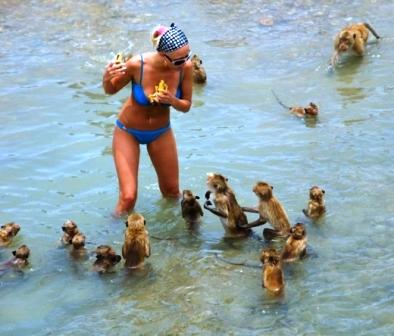 monkeyattack