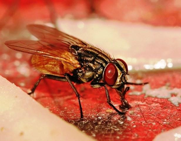 mosca-chupando-830x553