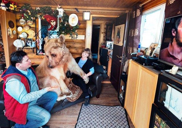 oso-adoptado-stepan-familia-rusa-1