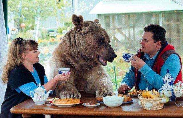oso-adoptado-stepan-familia-rusa-10