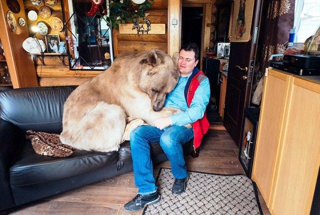 oso-adoptado-stepan-familia-rusa-6