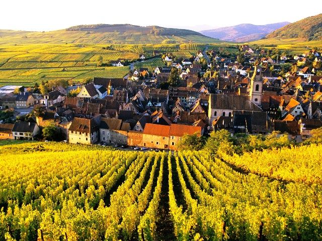 paisaje viñedo alsacia