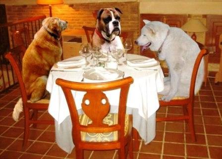 perros-comiendo.jpg ok