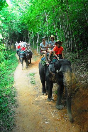 phuket-elephant-safari-photo_989924-770tall