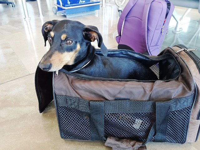 viajar-con-perro-sara-mindful-travel