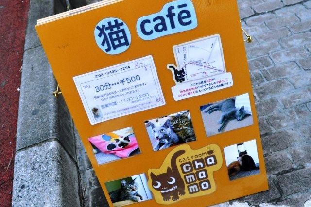 z cafe con gatos para acariciar
